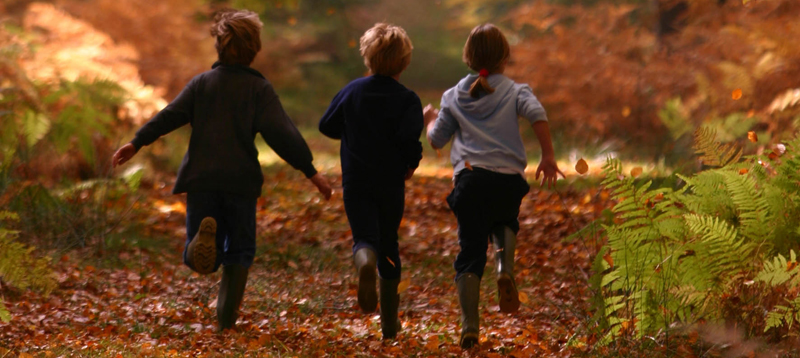 blog The New Forest Autumn Kids